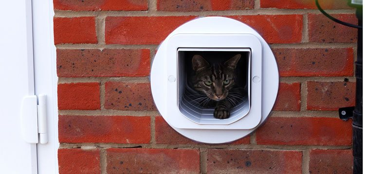 Cat Flap installation