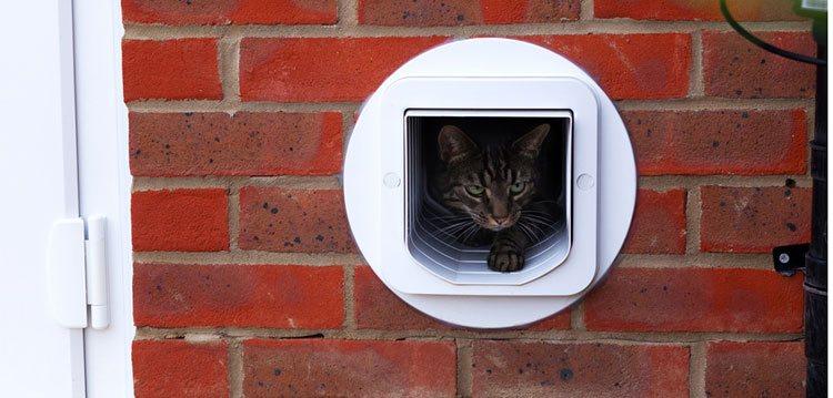 Pet Door Fitter Pangbourne Pet Door Installation Pangbourne