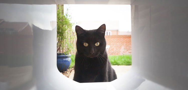 4 way cat flap